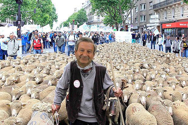 pecore_panziane